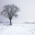 画面いっぱいに背景画像を表示して雪を降らせる方法
